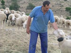 Valeriano Saez, socio de Oviaragón, con la oveja que lleva el dispositivo GPS en su explotación ganadera de Albarracín (Teruel)