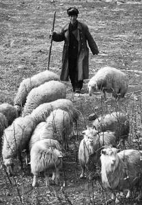China cambia el mundo también en el ovino