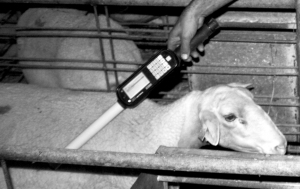 Detección de animales improductivos con el lector SIRA
